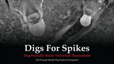 Digs-for-Spikes-Flyer-web
