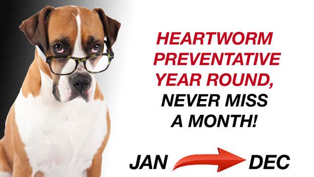 heartwormpreventitive